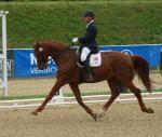 A para-equestrian rider gallops on a horse.