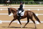 a female Para equestrian rider on a horse